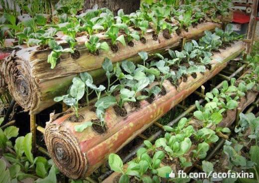 Tronc de bananier - Comment planter un bananier ...